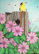 Finch Drawings Prints - American Gold Finch Among Pink Impatiens Print by Janet Hinshaw
