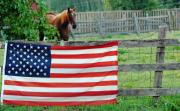 Stars And Stripes Mixed Media Framed Prints - American Horse Framed Print by Anahi DeCanio