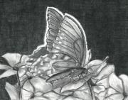 Tennessee Drawings Originals - American Lady Butterfly and Impatiens by Joy Neasley