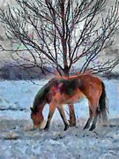 Grazing Snow Prints - American Paint in Winter Print by Jeff Kolker