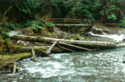 Drawing Prints Photo Originals - American Rainforest in Washington State by Sarah Biondo