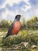 Bird Paintings - American Robin by Sam Sidders