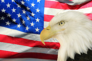 Eagle-eye Metal Prints - American Metal Print by Shane Bechler
