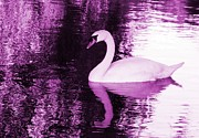 Swan Digital Art Posters - Amethyst Beauty Poster by Sharon Lisa Clarke