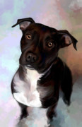 Dog Rescue Digital Art - Amila In Memoriam by Elizabeth Murphy