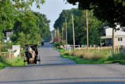 Horse And Buggies Prints - Amish Afternoon Print by David Arment