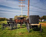 Amish Buggy Photos - Amish at the auction by Al  Mueller