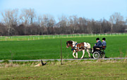 Amish Buggy Photos - Amish Boys by David Arment