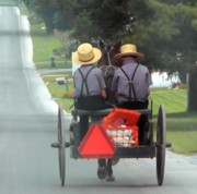 Amish Prints - Amish Boys On A Ride Print by Lori Seaman