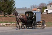 Horse And Buggy Posters - Amish Buggy and High Stepper Poster by David Arment