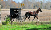 Horse And Buggy Framed Prints - Amish Buggy Framed Print by David Arment