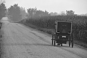 Horse And Buggy Prints - Amish Buggy Near Corn Harvest Print by David Arment