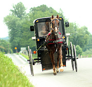 Amish Community Photo Prints - Amish buggy on the road Print by Emanuel Tanjala