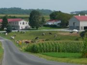 Amish Photo Prints - Amish Country Road Print by Lori Seaman