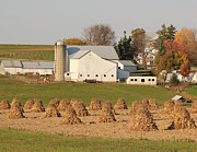 Donna Bosela - Amish Countryside