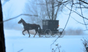 Horse And Buggy Framed Prints - Amish Dreamscape Framed Print by David Arment