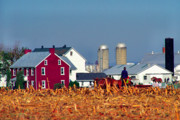 Cornfield Photos - Amish Farm by Thomas R Fletcher