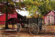 Farm Equipment Prints - Amish Farm Wagon Print by Terril Heilman