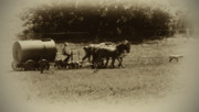 Amish Prints - Amish Farmer - Lancaster County Pa. Print by Bill Cannon