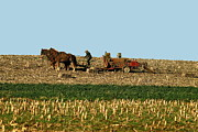 Amish Farmer Photos - Amish Farmer Baling by Sally Weigand