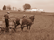 Amish Community Photo Prints - Amish Farmer Print by Janet Pugh