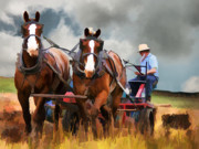 Bailing Hay Photos - Amish Farmer by Tom Griffithe