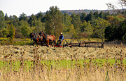 Amish Framed Prints - Amish Farming Framed Print by David Lee Thompson