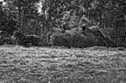 Haying Photos - Amish Harvest bw by Steve Harrington