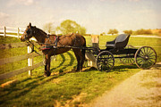 Horse And Buggy Posters - Amish Horse and Buggy Poster by Dave Mellenbruch
