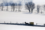 Snow-covered Landscape Framed Prints - Amish Horse and Buggy in Snowy Landscape Framed Print by Jeremy Woodhouse