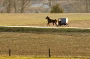 Amish Prints - Amish Horse And Buggy Print by Tim Laman