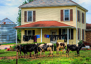 Rural Indiana Prints - Amish Laundry Day Print by Mark Orr