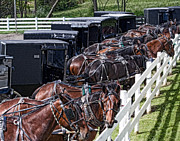 Horse And Wagon Photos - Amish Parking Lot by Tom Mc Nemar