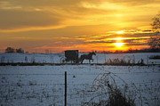Horse And Buggy Prints - Amish Sunset 2 Print by David Arment