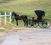 Sunday Drive Prints - Amish Transportation Print by Carolyn Postelwait