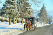Amish Buggy Photos - Amish Winter by David Arment