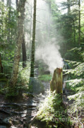Foggy Morning Posters - Ammonoosuc Ravine Trail - White Mountains New Hampshire USA Poster by Erin Paul Donovan
