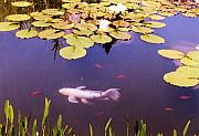Koi Ponds Photos - Among The Lilies by Jan Amiss Photography
