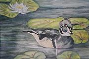Wood Duck Painting Posters - Among The Lillypads Poster by Debra Sandstrom