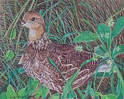 Quail Paintings - Among the Thistles by Anita Putman
