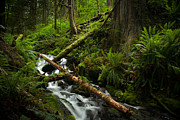 Waterfall Prints - Amongst the Ferns Print by Mike Reid