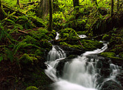 Waterfall Prints - Amongst the Moss Print by Mike Reid