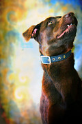 Humane Framed Prints - Amos Framed Print by Toni Hopper