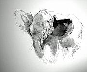 Paul Miller - Amy The Saved Elephant