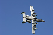 Armament Framed Prints - An A-10 Thunderbolt Maneuvers Framed Print by Stocktrek Images