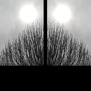 Austin Digital Art Posters - An Abstract of Mirror Image Winter Trees Poster by Jennifer Holcombe