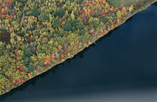 Colors Of Autumn Posters - An Aerial View Of A Forest In Autumn Poster by Heather Perry