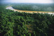 River Scenes Posters - An Aerial View Of Borneo Asian Elephant Poster by Tim Laman