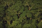 Woodland Scenes Prints - An Aerial View Of The Rain Forest Print by Michael Nichols