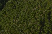 Plateaus Prints - An Aerial View Shows The Forested Print by Stephen Alvarez